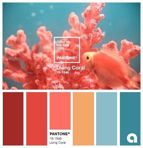 living coral couleur de l annee 2019